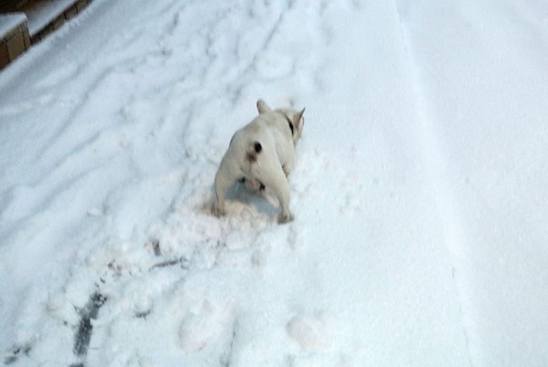 2014年2月8日大雪