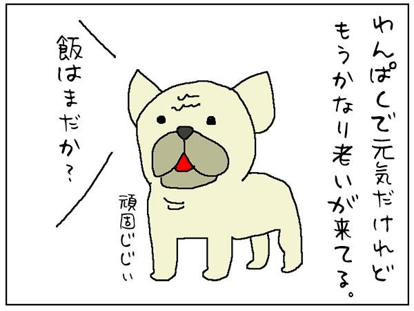 おじいちゃん犬