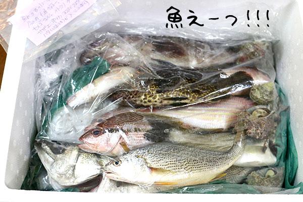 魚えーっセット