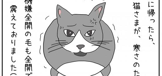 寒さに膨れる猫