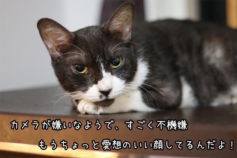 我が家の永遠の居候。猫のきゅーりさん。