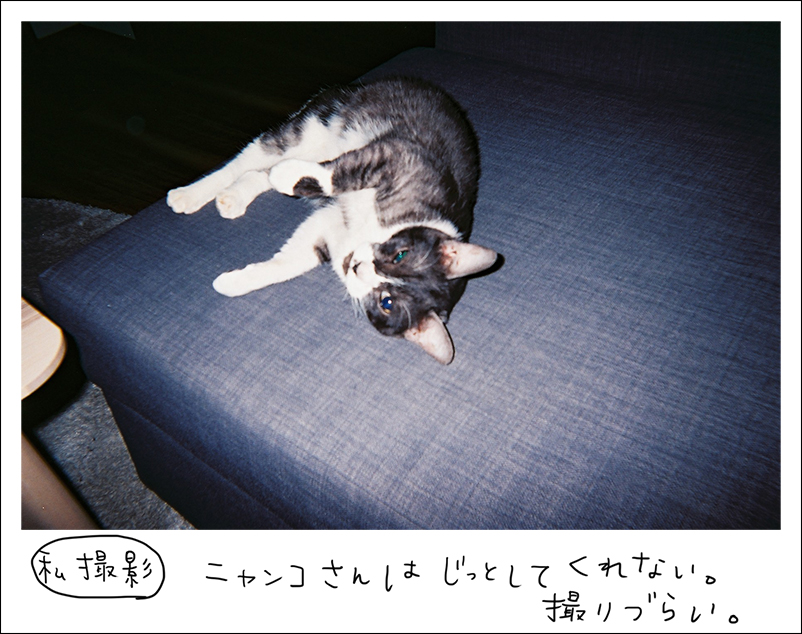 写ルンです-猫
