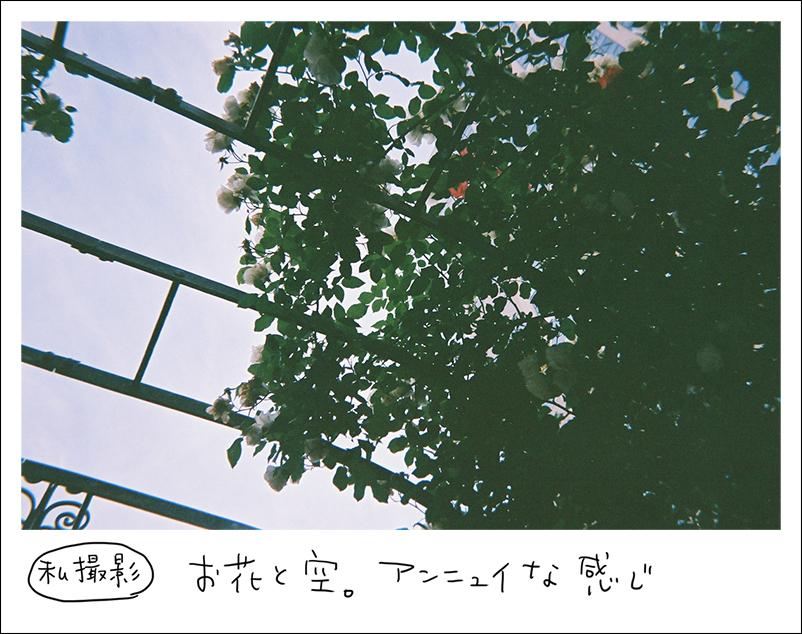 写ルンです-花と空