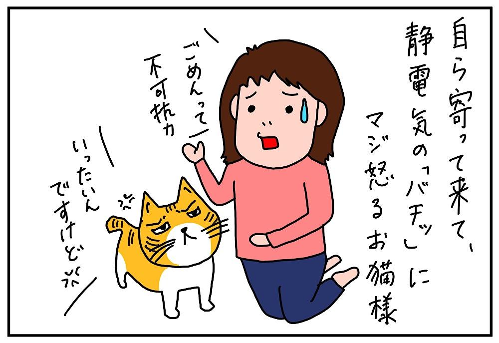 ネコちゃんに叱られる