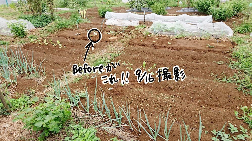 畑Before
