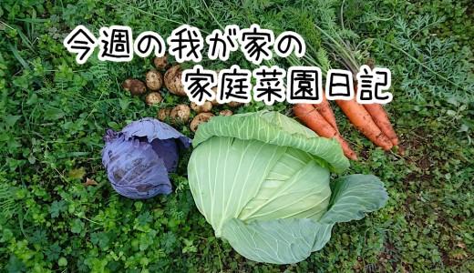 今週の我が家の家庭菜園日誌